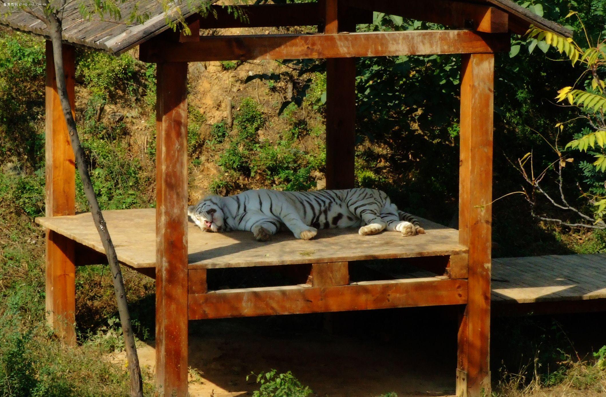 动物园推出一日游活动价格的两种方案――方案一成人150元,儿童每人60